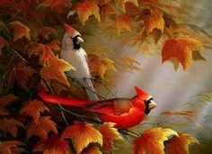 orange and brown birds - Google Search