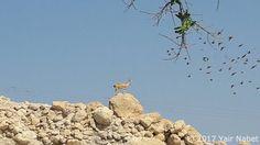 Ein Gedi by Yair Tours Israel © 2017 Yair Nabet