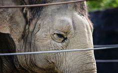 Oakland Steps Up for Circus Elephants With Proposed Bullhook Ban