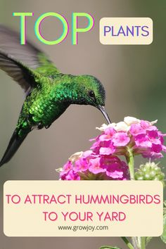 Bring the hummingbirds to your yard in droves with these plants! Hummingbird Quotes, Hummingbird Nests, Hummingbird Plants, Plants To Attract Hummingbirds, Attracting Hummingbirds, Garden Plants, Are You Happy, Attraction, Yard