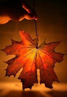 Love the beautiful fall leaves Fotografia Macro, Seasons Of The Year, Happy Fall, Belle Photo, Fall Halloween, Autumn Leaves, Autumn Harvest, Beautiful Pictures, Beautiful Beautiful