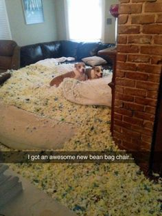 They Aren't Even Sorry Correction: I used to have an awesome new beanbag chair....