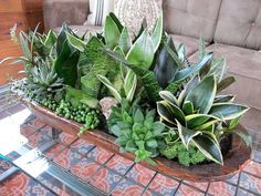Low Light Succulent Planter. Love the idea of using a dough bowl as the planter!