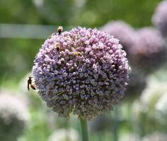 Keep those native pollinators coming back to your garden! Here is how to attract harmless, and hardworking bees to your garden...