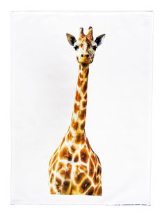 This large cotton tea towel has a classic giraffe head pose on it. Tall and majestic. Made from 100% cotton, hemmed on four sides. Cotton is high quality 185gsm. The dimensions of the Tea Towel are: 47cm (w) x 65cm (h). From the Series 6 Animals Range by Half a Donkey www.halfadonkey.co.uk
