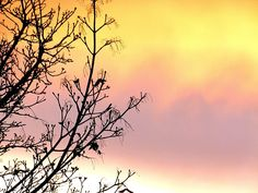 "A leafless maple tree is silhouetted against a uniquely colored and very beautiful spring sunset in the Lake Country District of the Okanagan Valley in British Columbia, Canada. ""Early Spring Sunset"""