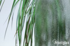 Ornamentglas 504 weiß  www.frontglas.de #Glas #Glass