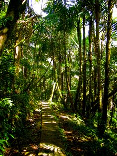El Yunque Rainforest, Puerto Rico. If u have gone there then u should go. Just sayin