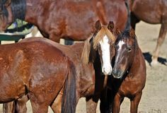 Wild Horses Saved By Billionaire's Wife | Simply Marvelous Horse World