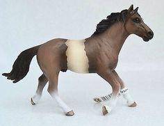 Pinto Stallion EXCLUSIVE - Ranofer