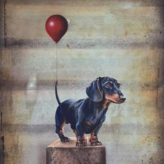 'The Red Balloon ' Idea - tie a balloon to a tail and watch what happens Vintage Dachshund, Dachshund Art, Funny Dachshund, Dachshunds, Illustrations, Illustration Art, Weenie Dogs, Doggies, Animal Antics