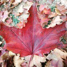 Well done Canada for paving the way towards common sense... .  . . . . . #canada #legalise #cannabis #legalisecannabis #mapleleaf