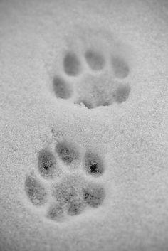 pawprints ❥ԼƠƔЄԼY