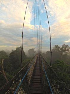 Amazon. Ecuador.