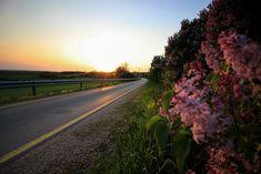 Karger Virág  Kivirágzott a bicikli út Csodálatos látványban lehetett része annak, aki április végén a Csókakőt Mórral összekötő bicikli úton járt. A falutól csupán pár métert kellett haladni ahhoz, hogy a lila minden árnyalatában pompázó orgonabokrok kábító illata megcsapja orrunkat. Több kép Virágtól: https://www.facebook.com/virofoto/
