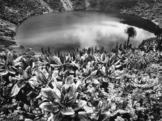 Sebastiao Salgado (born February is a Brazilian social documentary photographer and photojournalist. Edward Weston, Documentary Photographers, Famous Photographers, Magnum Photos, Salt Of The Earth, Nature Reserve, Natural Life, Black And White Photography, Art Photography