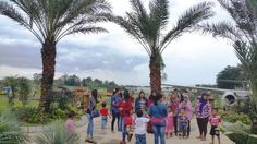 Amazing !!! Kebun Wisata Kurma Pasuruan Pertama di Indonesia