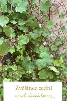 Plant Leaves, Fruit, Plants, Plant, Planets