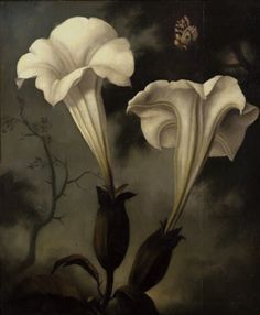 ❀ Blooming Brushwork ❀ - garden and still life flower paintings - Stephen Mackey | Nocturnal Butterfly Boy