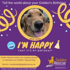 """Is your GR Golden's Birthday coming up? If it is, we at Golden Rescue would love to have a recent photo of your special family member. Please send photos to socialmedia@goldenrescue.ca Please use """"Birthday Photo"""" as your subject line and be sure to include your dogs' name and rescue number in your email. Please send your photo to us at least one month in advance of your Golden's birthday. Thank you! #goldenretriever #rescuedog #adoptdontshop #birthday Golden Events, Golden Birthday, Tell The World, Im Happy, Birthday Photos, Dog Names, Rescue Dogs, Special Day, Fundraising"""