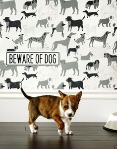 dog room decor ideas #dogroomdecorideas