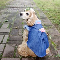 귀엽고 시크한 강아지옷 CoCCoLa 코콜라 http://coccola.co.kr/ 코카옷 중형견옷