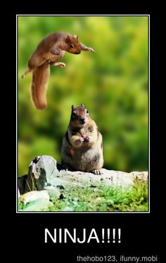 reminds me of when my bf used to call me ninja squirrel haha