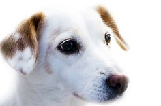 Hund, Tier, Freund, Loyalität