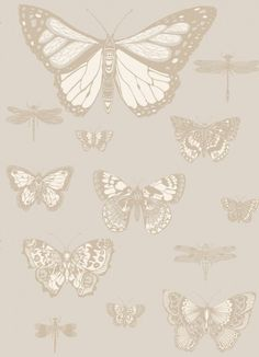 Butterflies and Dragonflies (103/15064) - Cole & Son Wallpapers - Taken from the Cole & Son archives this elegant design surprises with its scale. It features large graphical butterflies and dragonflies in shimmering metallic on cool neutral grounds. Shown here in white on taupe grey with metallic gold. Other colour ways available. Paste the wall product. Please request a sample for true colour match.
