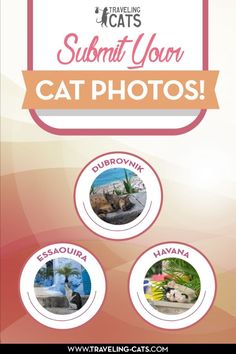 Submit your cat photos and travel pictures of cats to be featured on Traveling Cats - http://www.traveling-cats.com/p/submit-cat-photo.html