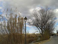 La cometa naufraga mira desde su trampa al Puente Viejo sobre el río Túria