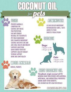 Coconut oil for doggies