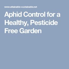 Aphid Control for a Healthy, Pesticide Free Garden