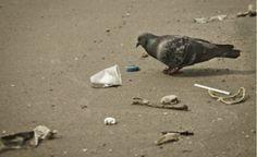 Programa Lixo Zero, no Rio de Janeiro, reduz 34% lixo lançado em vias públicas