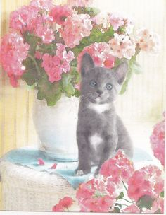 Kids Scrapbooking Collectible Grey Kitty Cats Blue Eyes STICKER Decal Animals  #Handmade
