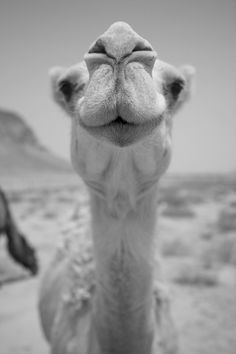Given a Word from a friend that the camels are coming loaded with gifts and blessings!  SEND THE CAMELS, LORD! <3
