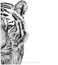 """720 Likes, 73 Comments - Jessica Lebo (@jessicaleboart) on Instagram: """"Half of a tiger face drawn in graphite. For those times you're too lazy to draw the whole thing.…"""""""