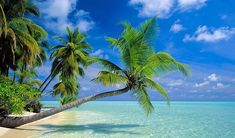 Florida Palm Trees - Palm Tree Pictures and Palm Tree Catalog