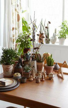 Plants + ceramics