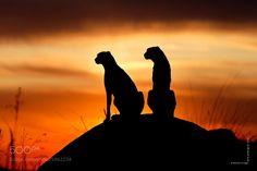 Cubs - The Cat Family Inspiring Photography