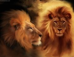leeuwenkop. LEO