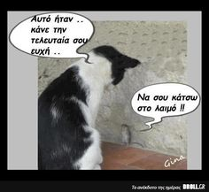 """""""Make a last wish"""" - """"To choke you"""" Funny Cats, Funny Animals, Funny Jokes, Funny Greek Quotes, Humorous Quotes, Have A Laugh, Laugh Out Loud, Funny Photos, Picture Video"""