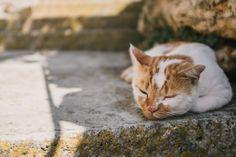 Photo By Chris Lawton | Unsplash   #cuteanimals #pets&animals #animatedmovies #movies #cats #anime #coverletters #careeradvice #animals #nature #love #internetofthings #sleep #animation #hotsexyshemales #tires #funnycatphotos #kitty #kitten #saludanimal #animal #cat #cathealth #shadowit #animalsandpets #marineanimals #catblog #kittens #hotrodmagazine #hotrods #sleepapnoea #justforfun #cutebabyanimals #animalrights #lovemarketing #selflove #petshop #pet #straydog #petsupplies #rubyonrails…