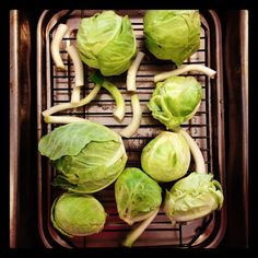 Smoked Brussels Sprouts with Roasted Apple and a Cider-Mustard Sauce. Because the vegetable course should be just as awesome as the pie.