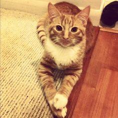 My cat Rui.  So dang CUTE