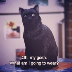 27 Times Salem Saberhagen Was Your Spirit Animal Saturday struggles Funny Sign Fails, Funny Signs, Sabrina Cat, Movie Quotes, Funny Quotes, Lyric Quotes, Quotes Quotes, Qoutes, Salem Cat