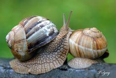 snail by ~Tulgay on deviantART