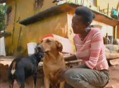Una perra llamada Lilica tiene una especial devoción por los que quiere. Ella viaja kilómetros cada noche para llevarle comida a los demás animales de su familia: otro perro, un gato, gallinas y un...