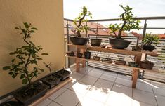 bonsai auf einem bonsairegal bonsai pinterest bonsai yard ideas and gardens. Black Bedroom Furniture Sets. Home Design Ideas