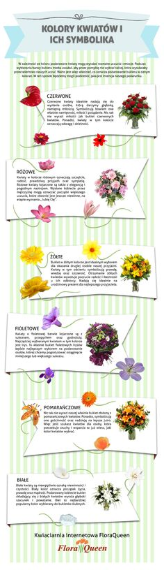 infografia about colours of the flowers
